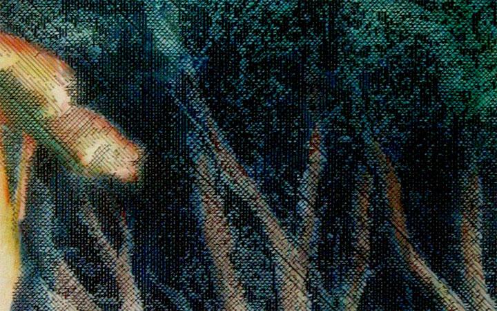 Pohutukawa(detail)